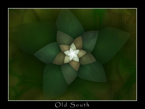 Old South by sharkrey