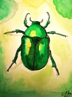 Scarab watercolor by Eif-ka