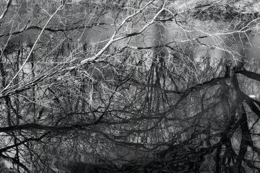 bare branches by alban-expressed