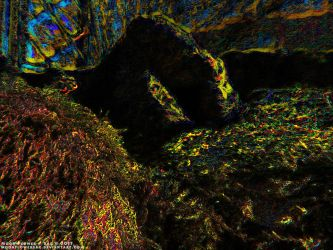 Garden1 - Psychedelic Moss On The Rocks by MoonFlowerSax