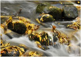 wet fall by Wilithin