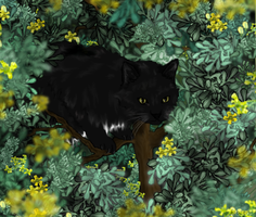 Ravenpaw by Frozenfir