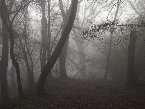Haunted Woods by Embrace-The-Night