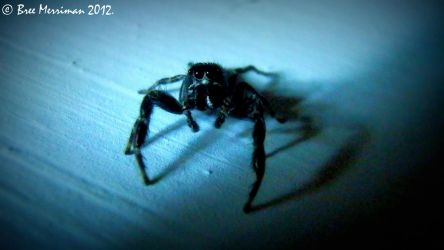 Jumping Spider III by BreeSpawn