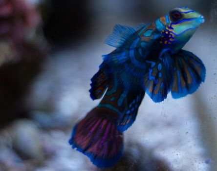 Tropical Fish 7 by CastleGraphics