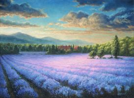 Lavender field by Irbeus