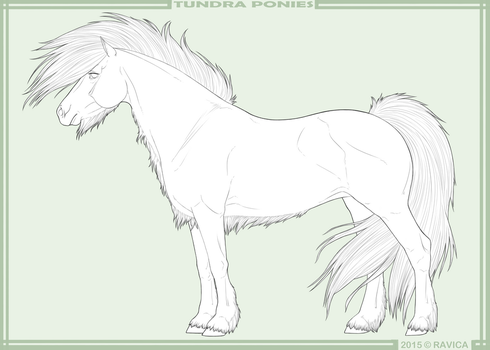 Tundra ponies - import lines by Ravica