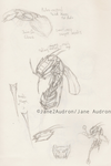 Insect Concept: Stykes by Jane2Audron