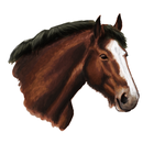 February 2013 - Bay Clydesdale by Finnisterre