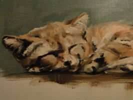 Oil Sketch, Sand Cat by vonumbourg