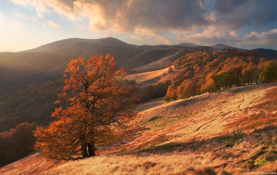Autumn forest in Carpathian Mountains by Sergey-Ryzhkov