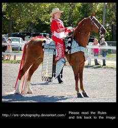 -Parade Horse- :stock: by SRS-Photography