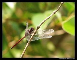 Dragonfly by punksafetypin