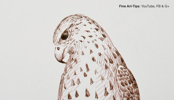 How to Draw a Falcon With Pen and Ink by ArtistLeonardo