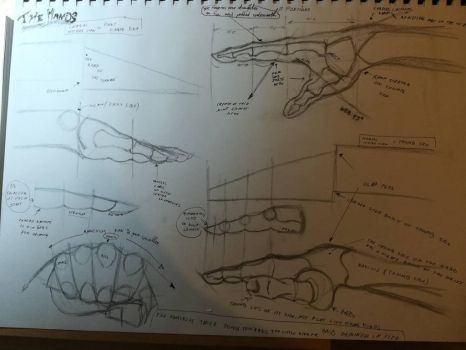 Anatomy of the hands study p.1 by Andrix9743