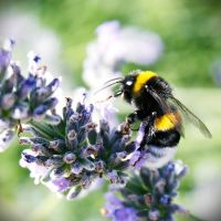 free like a bee IV by itsRisingLove