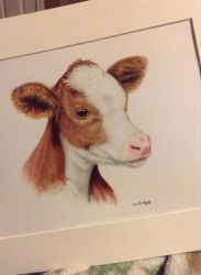 Ayrshire Calf by EquineArtist-Fanatic