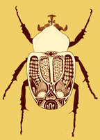 Scarab by beaulivres