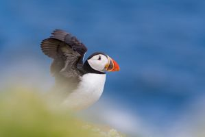 Stretch My Wings by NicoFroehberg