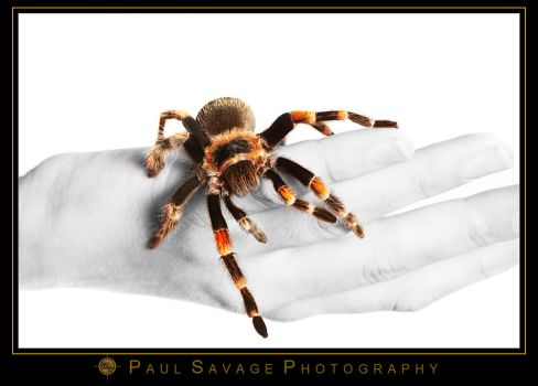Spider on Hand by ShotByASavage