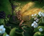 Fairy and blackberry by Traaw