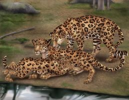 Jaguar Family by arania
