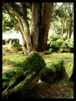 Moss Forest by Ameera