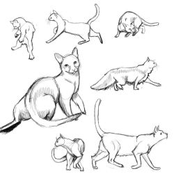 Cat Poses: study1 by FlameFoxe