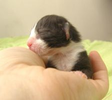 New Born Baby Sai by ToygerCat