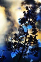 Dead Blooms at Dusk by GrimFay