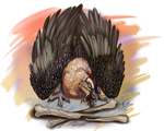 Crack the Bones Bearded Vulture by Shadowind