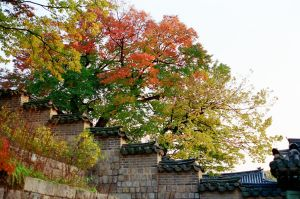 Changdeokgung Palace: Trees I by neuroplasticcreative