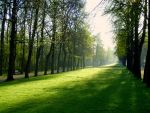 springtime in the parc by Mittelfranke