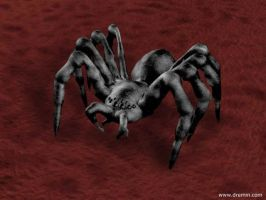 3D Spider by Dremin