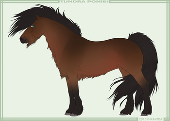 Tundra pony import 008 - Sold by Danesippi