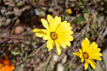 Bright yellow flowers by SoulRiser