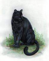 Black Panther by Gray-Ghost-Creations