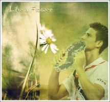 djokovic flower by angelcfc