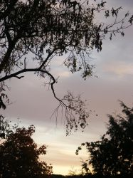 oct 4th sunset 2 by BlueIvyViolet