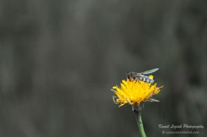 A small wasp by vertiser