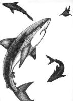 Sharks by starglo21