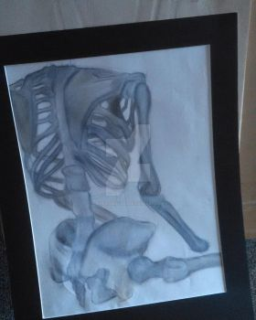 Skeleton Study from Figure Drawing Class by awesomestarz