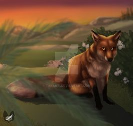 Fox in the Evening by Takarti