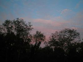 Trees and red-white-blue sky by steward