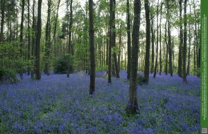 Glades of Blue 4 UNRESTRICTED by Elandria