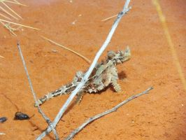 Desert Park - Thorny Devil by TricoloreOne77