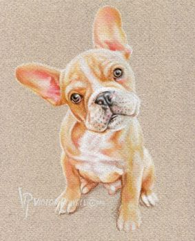 French Bulldog pup by theartyst