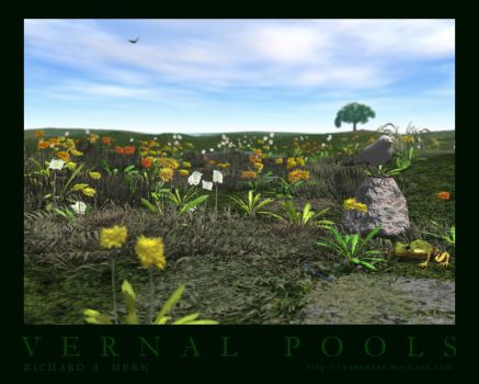 Vernal Pools by richmerk