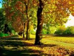 Colours of Autumn by nviki89