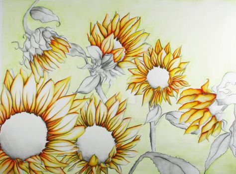 Sun Flowers by anellatang